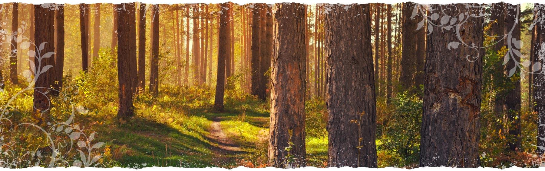 goldforest